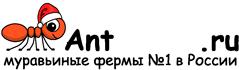 Муравьиные фермы AntFarms.ru - Нижний Новгород